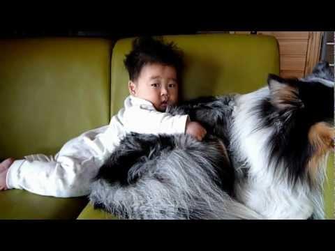 シェルティと赤ちゃん