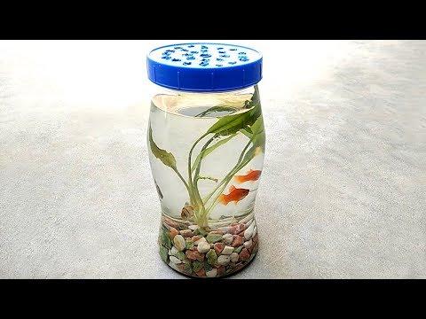 Bottle Aquarium | Mini Aquarium And Aquarium Fish