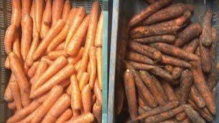 Umyte marchewki = żywność przetworzona?
