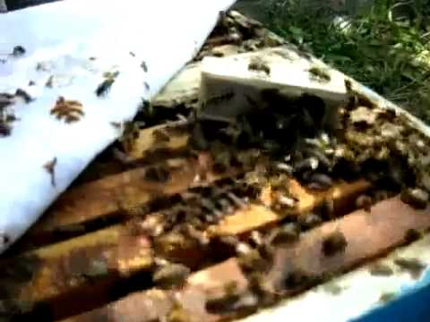 Mike Palmer: Is Honeybee Hive Queenright?