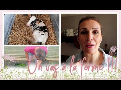 weekend-vlog-famille-du-19-et-20-juillet-:-cuisine,-ballade-à-la-ferme-et-repos-!!!
