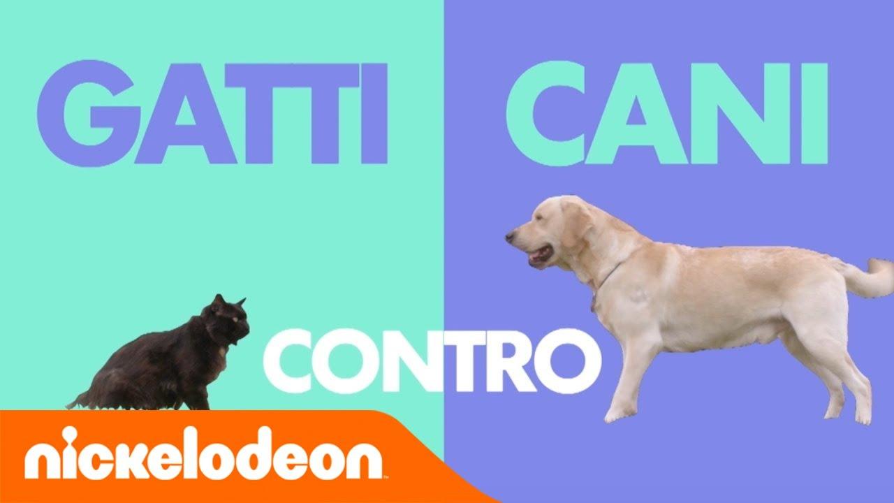 Il mio amico una bestia 2 gatti vs cani nickelodeon for Youtube cani e gatti