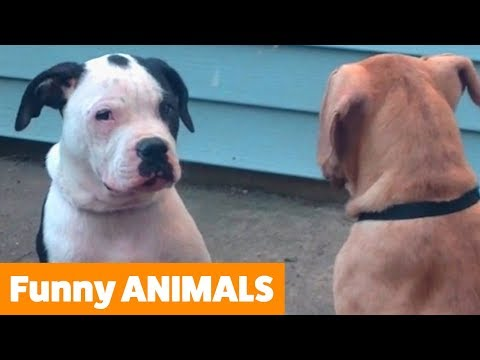 Funniest Animal Bloopers | Funny Pet Videos