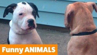 funniest-animal-bloopers-funny-pet-videos