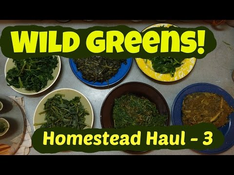 Wild Greens: Homestead Haul 3 cooking 10 different weeds