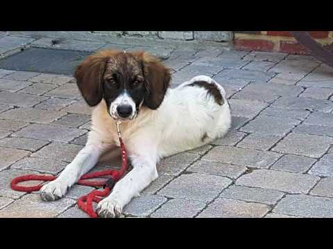 Louie - Dog Rescue Greece