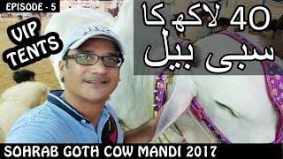 COW MANDI SOHRAB GOTH 2017 | VIP TENTS | Episode 5 | Video in URDU/HINDI
