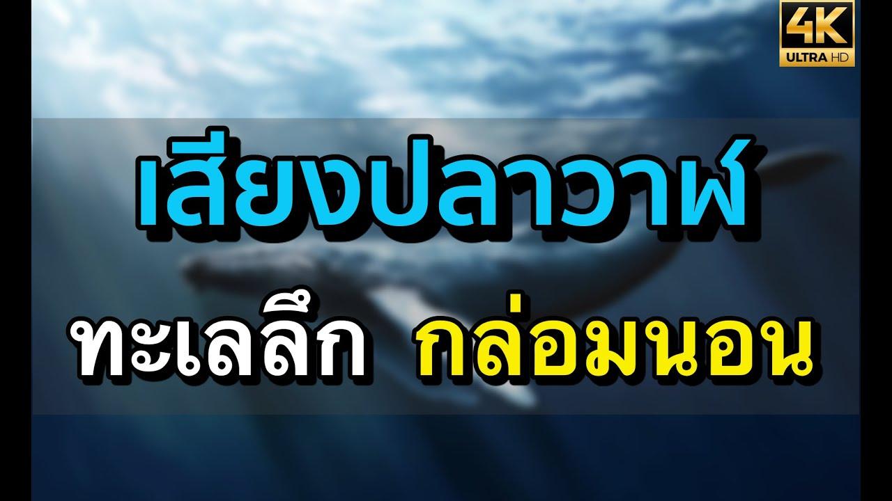 ทะเลลึก l เสียงปลาวาฬ l Deepsea l หลับลึก  l คุณภาพ 4 K
