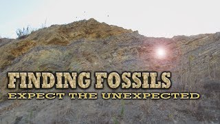 Finding Fossils - Expect the Unexpected