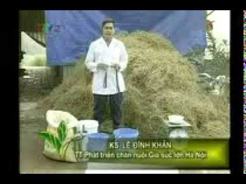 vietlinh.vn - Kỹ thuật phòng tránh rét cho trâu bò (Phần 1)
