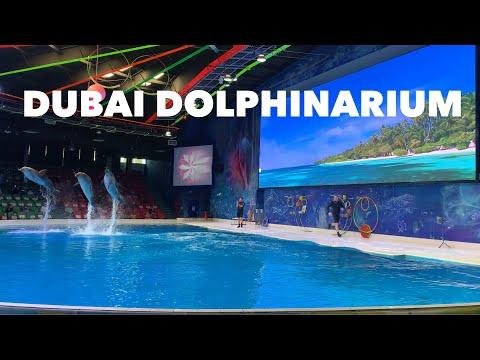 Dubai Dolphinarium | Creek Park | Dubai | UAE