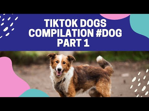 Tiktok dogs compilation #dog part 1 | WINTER PH