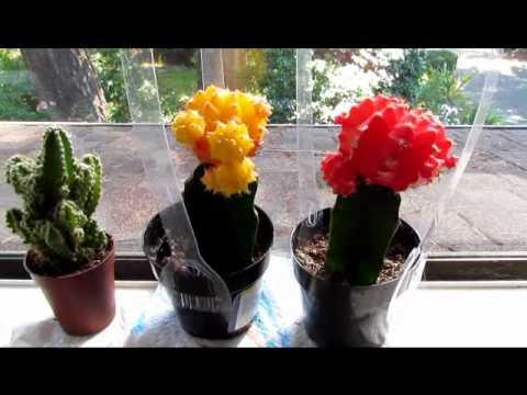 Venus Flytrap Moon Cactus Herbs Dwarf Lemon Tree