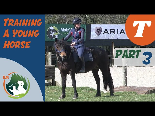 Going walk about | Starting a young horse | Training series | Emma Massingale (Part 3 of 3)