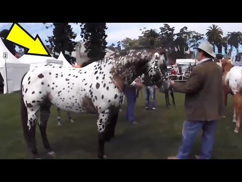 5 Most Unusual Horses Breeds in The World #2