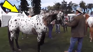 5 Horses You Won't Believe Actually Exist! #2