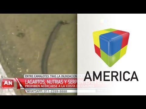 Alerta en Quilmes por la invasión de víboras, yararás y lagartos