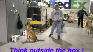 Detection Dog Training With The K-9 Bsd