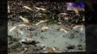 Копия видео Глобальные проблемы человечества(, 2013-05-10T07:51:38.000Z)