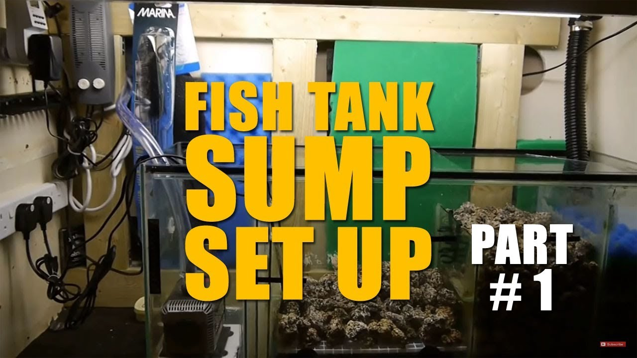 How to set up a fish tank sump doovi for How to set up fish tank