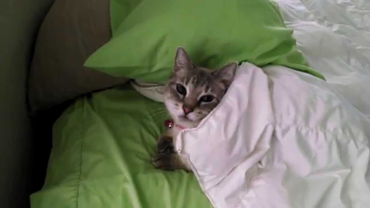 How To Stop Cat Sleeping On Bed