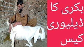 Category: karachi cow mandi videos - Funny Videos, Movies india, TV
