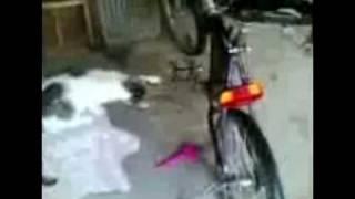 Кот и велосипед!!!!!!! СМОТРЕТЬ ВСЕМ!!!