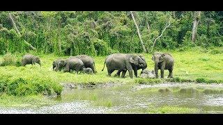 Dooars Trip (Jayanti Forest) & Boro Mohakal Trekking