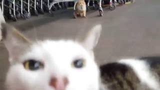 Random Cats Meowing and Hustling around Supermarket