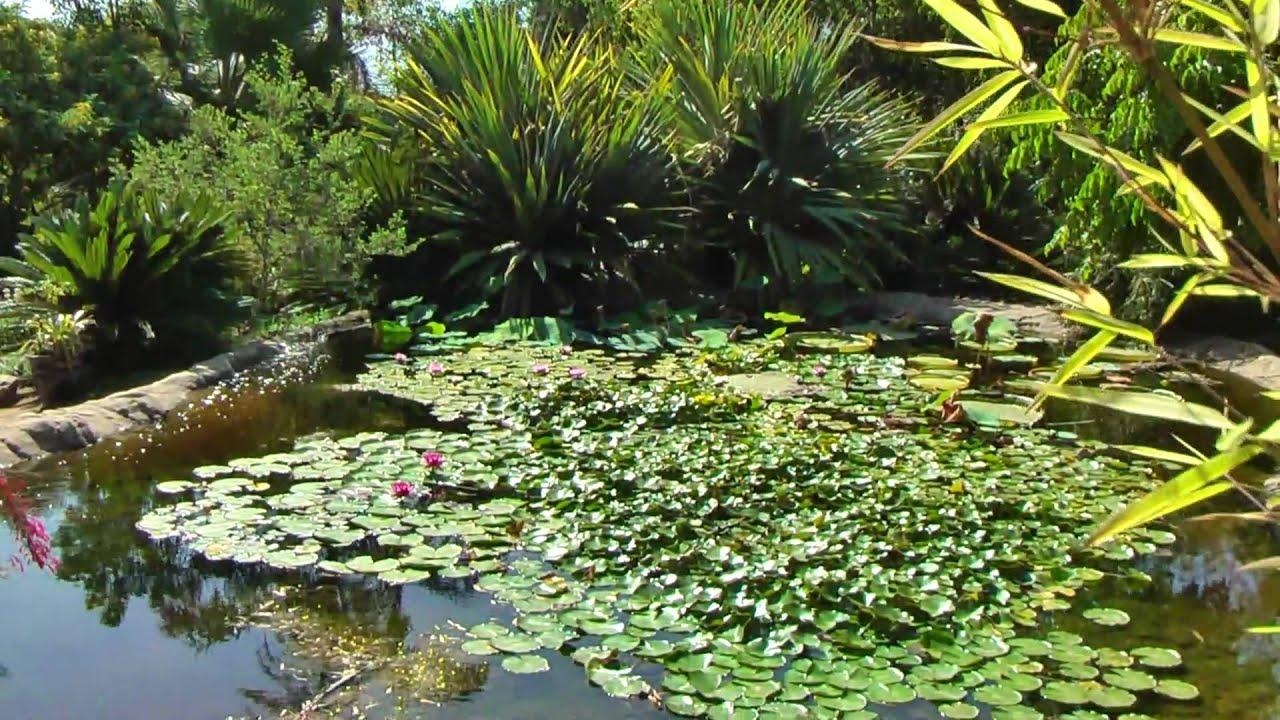 exploring the san go botanical garden youtube