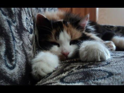 cats ear mites medicine