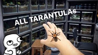 MOVED ALL the TARANTULAs into the NEW TARANTULA ROOM !!!