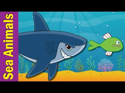 Under The Sea | Marine and Sea Animals Song for Kids | ESL for Kids | Fun Kids English