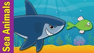 Under The Sea   Marine and Sea Animals Song for Kids   ESL for Kids   Fun Kids English