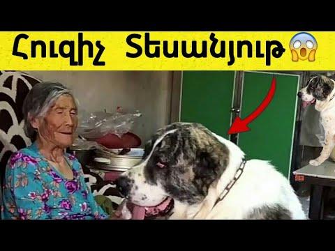 Հուզիչ պատմություն մի տատիկի և շան մասին