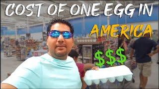 Price of 1 Egg in USA.अमेरिका में 1 अंडा का क्या रेट है?
