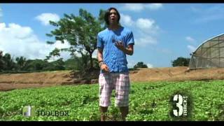 Gourmet Farms - Organic Farm - 3 Track Off