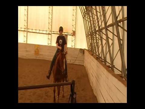 Sorrel Horse.wmv