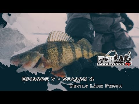 PERCH & WALLEYE COMBO - S.4 Ep.7 (Devils Lake, ND)