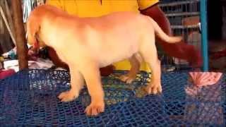 Galiff Street Bird and Pet animal market, Kolkata vid 7