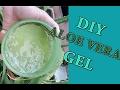 DIY Aloe Vera Gel | Cara Membuat Gel Lidah Buaya