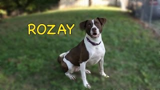 Adopt Our Pup Pal Rozay!