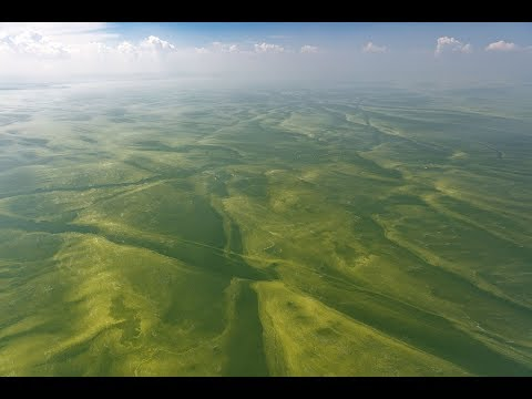 Something Strange Has Turned Lake Erie A Ghostlike Green – And It's Really, Really Not Good News