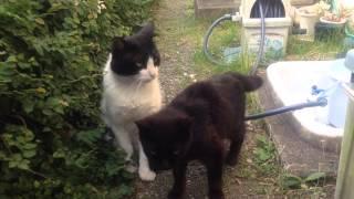 野良猫ジジとパートナーの「もどき」。