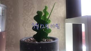 new취미, 식물 키우기(립살리스쇼우, 양배추 수경재배…