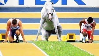 15 Momentos de Genio Animal Captados en Cámara