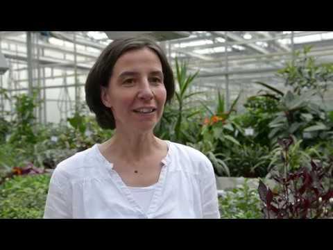 Prof Hohe Beantwortet Fragen Zum Gartenbau Studium An Der