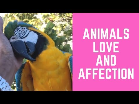 Love Parrots and Dog Compilation
