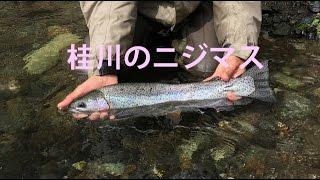 50cmオーバー!山梨県桂川のニジマス fishing in Japan