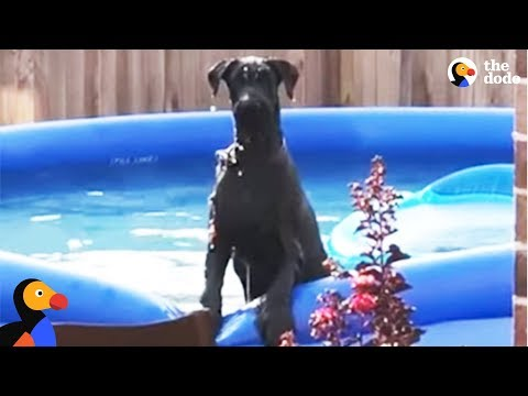 Dog Caught Sneaking Into A Swimming Pool | The Dodo